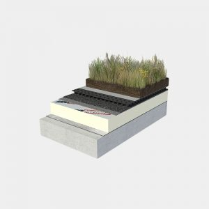 diatreta semi-intensive green roof